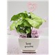 5_in_Keep_Growing_Planter_with_LOVE_Pick_-_19.99