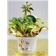 5_in_You_Grow_Girl_Planter_with_Pinwheel_-_19.99